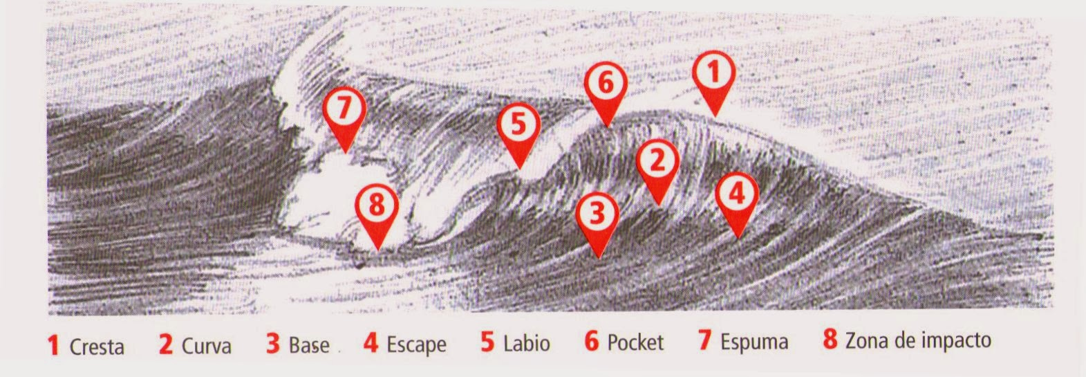 Anatomía de las Olas (Surf) – KITESURFSITE